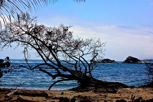 lone tree Tayrona