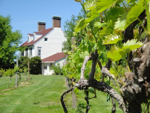 Vineyard and St. Michael's Manor, Scotland, MD