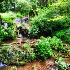 The woods are alive and full of magick. Listen to the water. She will lead the way. Trust where they lead you.