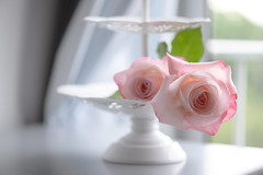 - Indoors beauty - Light Pink
