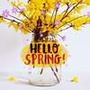 Non ho mai amato molto la Forsizia gialla. Eppure i colori della primavera che sboccia, all'inizio, sono proprio questi. Nel bosco e nei prati la palette di colori è quasi solo viola e gialla. Poi pian piano arrivano tutti gli altri colori tenui e pastell