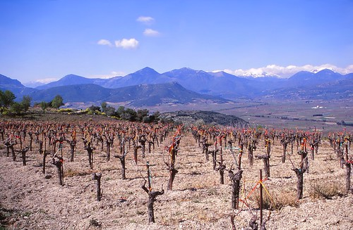 greece peloponnese vineyard wine landscape mountains view