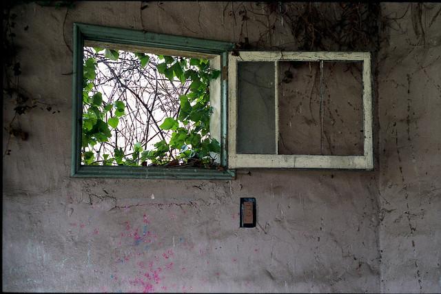 Ivy window decay