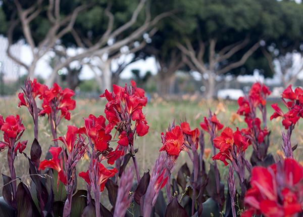 flowers, park hayarkon tel aviv, פרחים, פארק הירקון תל אביב