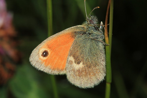 Small Heath 29538