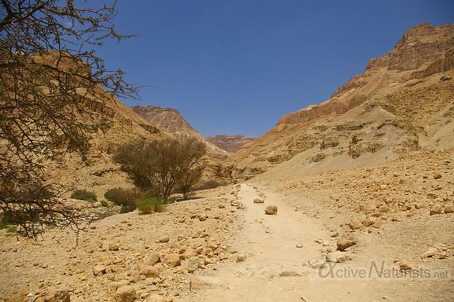 view 0000 Nahal Arugot, Dead Sea, Israel