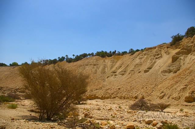 view 0001 Nahal Arugot, Dead Sea, Israel