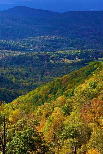 tree fall virginia overlook 5photosaday bluemoutain