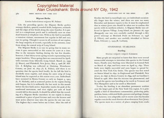 Cruickshank1942BirdsAroundNYC-Shrike
