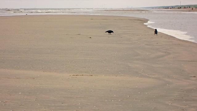 Goldengelchen Noordwijk aan Zee006