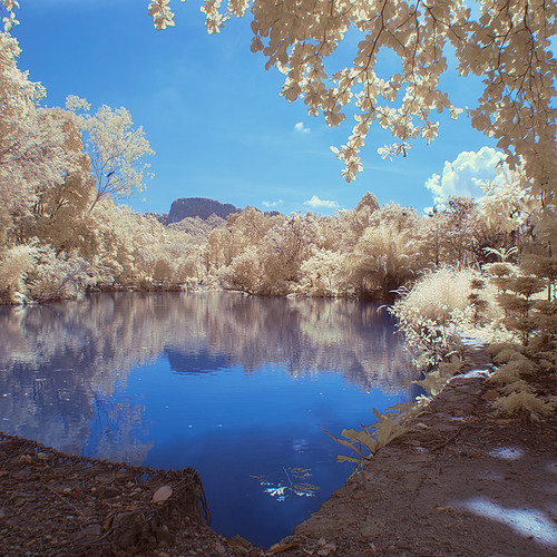 blue white lake reflection tree nature water pool landscape ir zoo foliage filter infrared negara