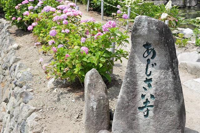 20140614.16_ajisai03