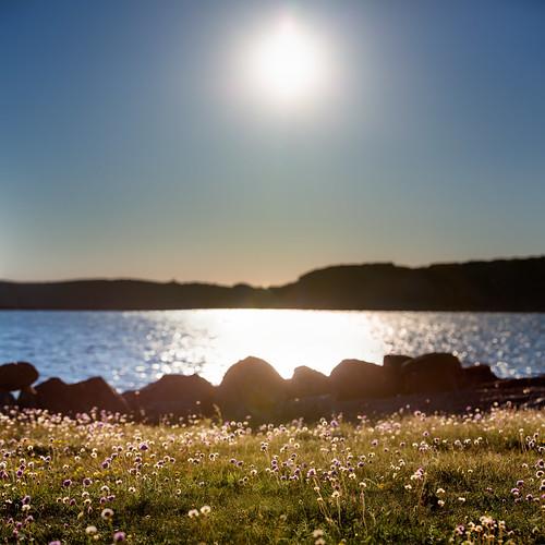sea summer sun sweden sverige bohuslän västkusten fjällbacka västragötalandslän veddö