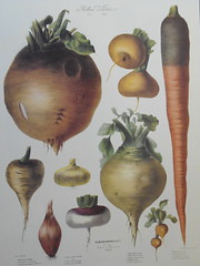 shallot(0.0), wood(0.0), painting(0.0), gourd(0.0), vegetable(1.0), produce(1.0), food(1.0), still life photography(1.0), still life(1.0),