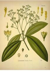 Kohler's Medizinal-Pflanzen band.1 (1887)