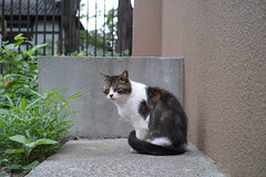 Cat! (Hongo, Tokyo, Japan)
