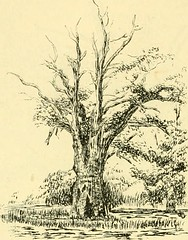"Image from page 122 of ""Essex naturalist: being the journal of the Essex Field Club"" (1887)"