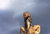 sculpture de Marion Heybroek et Ulysse Plaud 1 / Joucas, Luberon