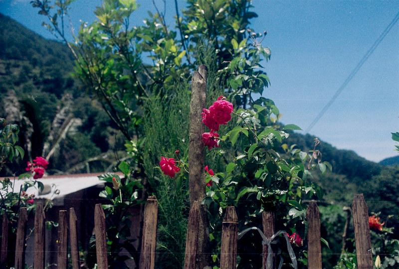 Canon AE-1 + Kodak Pro Image 100