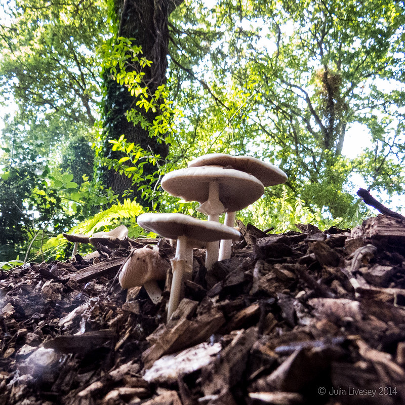 Early fungi
