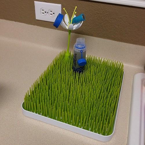 221:365 Love my new kitchen lawn.