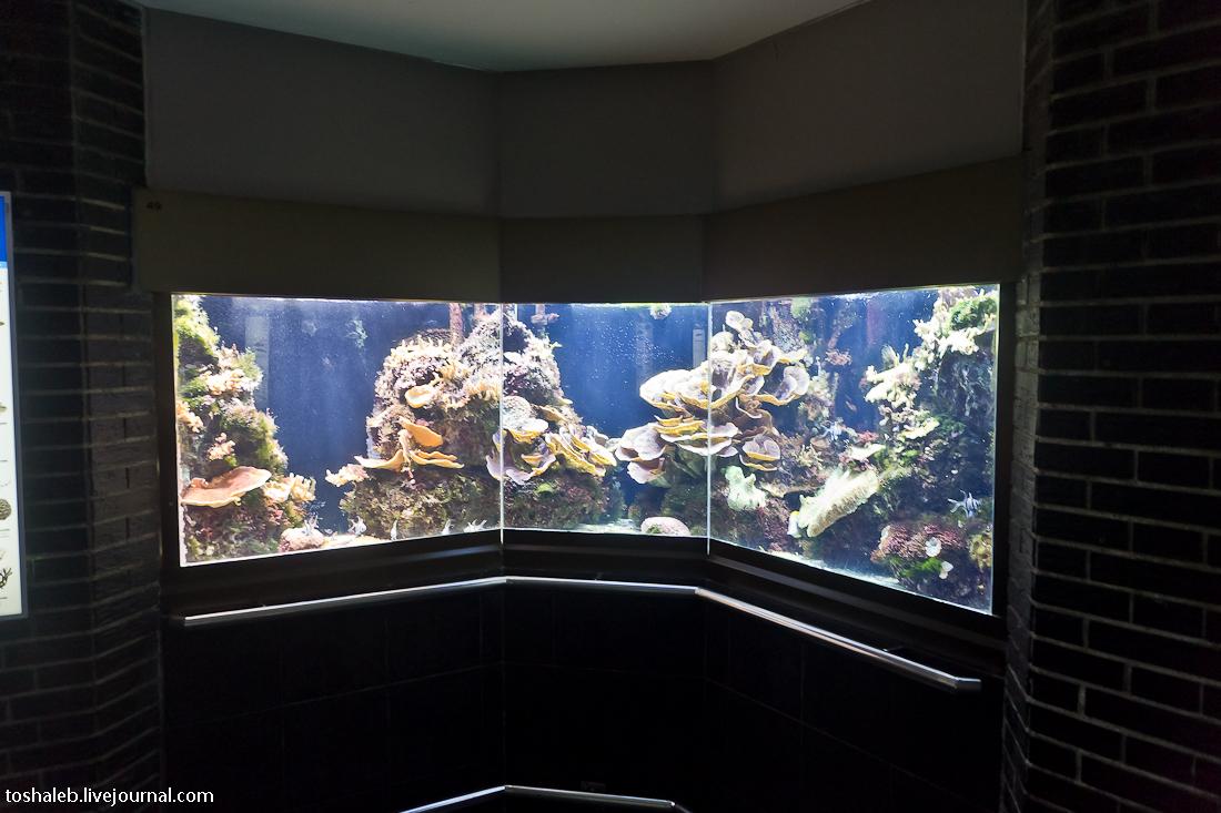 Берлин_аквариум-18