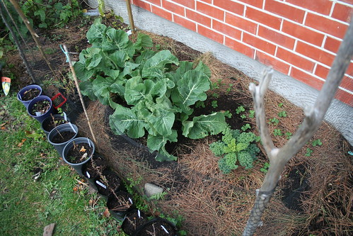 Garden Bed, House North - 2014-08-13 - 01