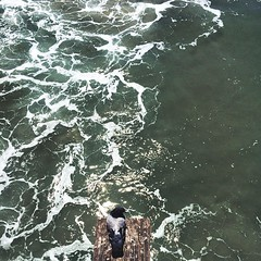 #latergram #birds #sanclemente #pacific #beach #dailynature #naturelovers #vscocam #vsco