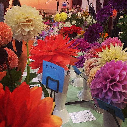 Good afternoon out at the flower and vegetable show today!