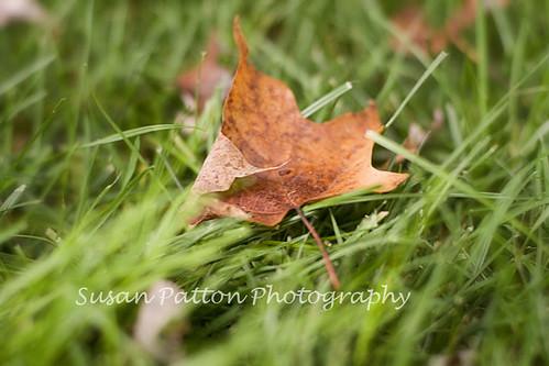 wred_leaf