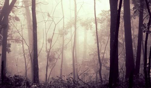 20070823   Shenandoah National Park, Virginia R039