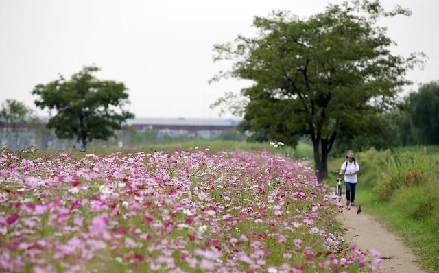Korea_Ichon_Hangang_Park_20140912_03