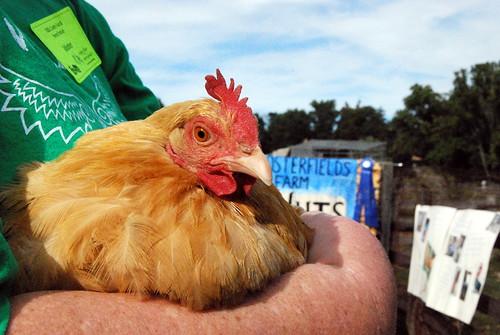 WPIR - Caramel the Chicken-001