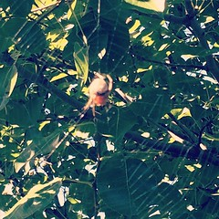 I almost walked into this bad boy (girl?) this morning. Glad it's outside in a tree. Hope you catch some insects, buddy.