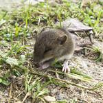 Kleinen muisjes onder de hangschop