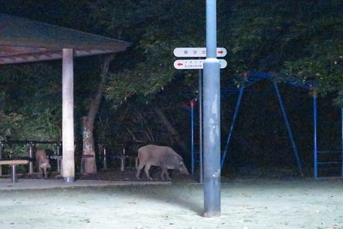 Adachi Park