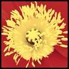 #poppy #thetron #hamgardens