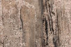 Sand on Wood, Park Point