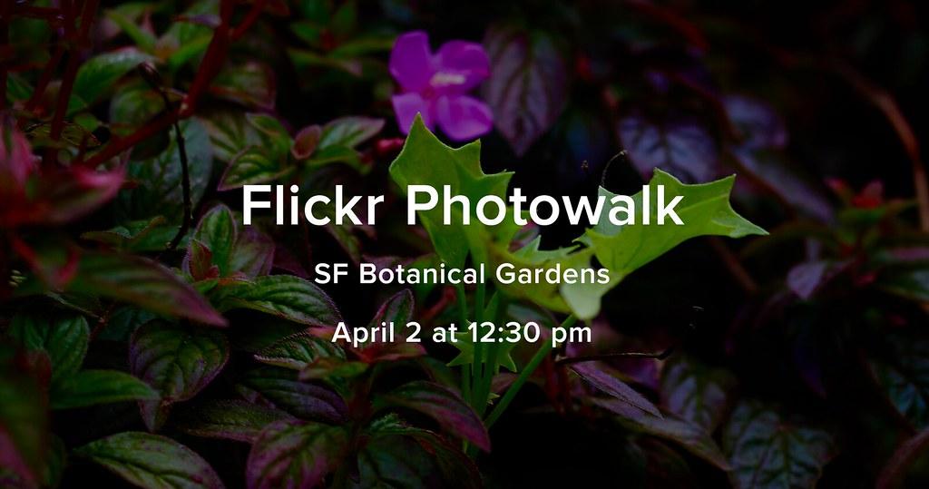 SF Photowalk
