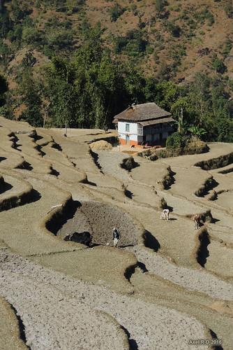 bâtimentmaison champs montagnes necha nepal préci solukhumbu terrasseterrasses