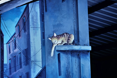 Yuanlin 員林 - Cats on Roof