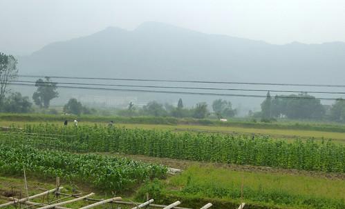 Zhejiang-Wenzhou-Yantoucun-bus (58)