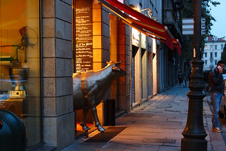 Turin Bull Out for a Stroll