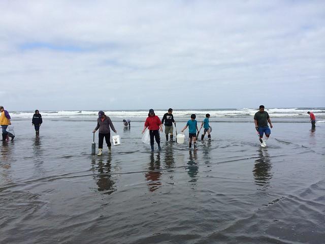 Razor clam digging at Grayland Beach