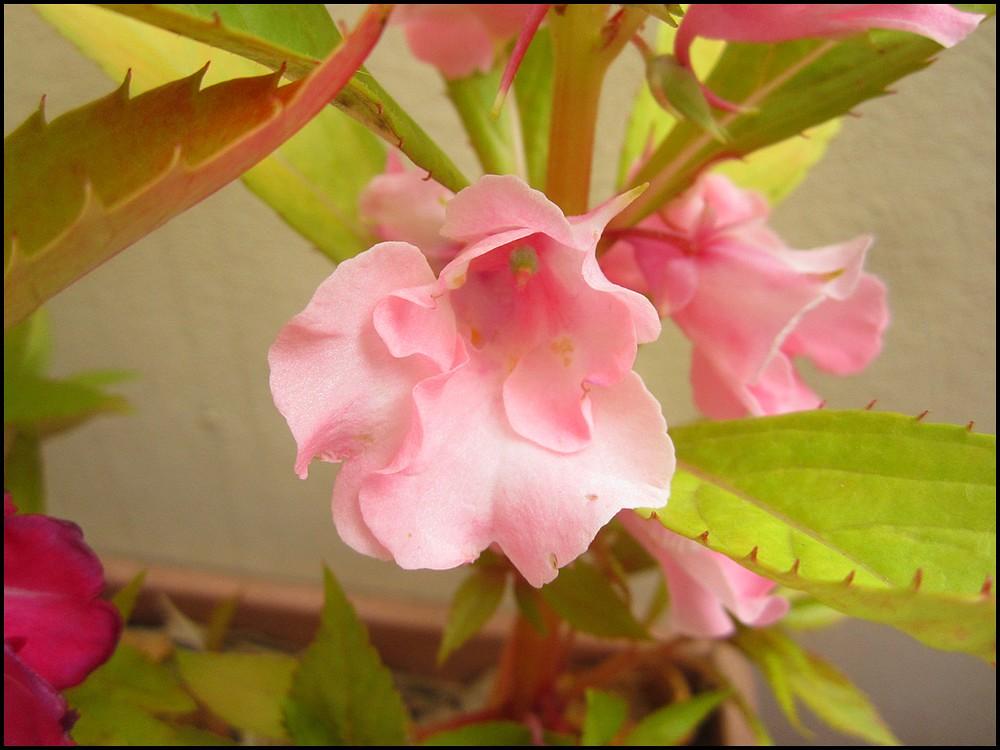 cultiver sur balcon vitaminbit de