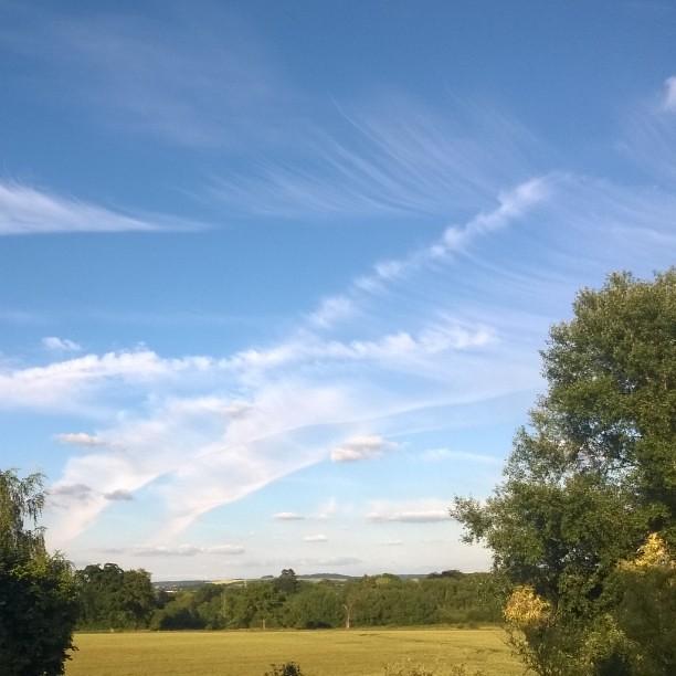 Wheat field sky blue
