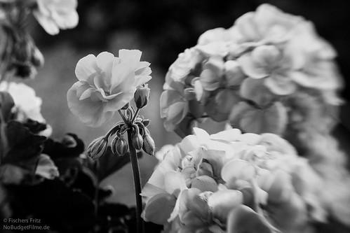Lensbaby_Flower.jpg