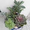 #tgif #succulent #containergarden