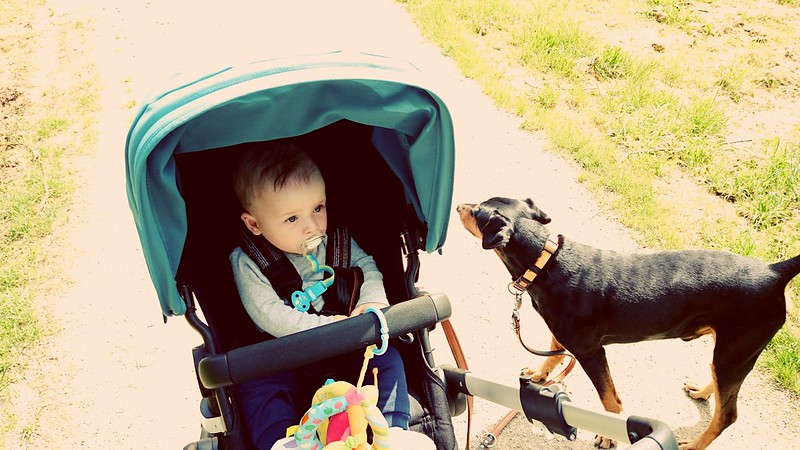Afternoon walk with the boys
