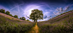Lavender Sky by Mr Gray Scale